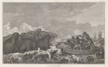 Chukchi Sea in the Arctic Ocean: Hunting of Sea Horses. After John Webber artist on the Third Voyage. Dutch Edition