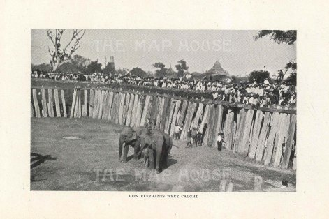 Mandalay. How elephants were caught.