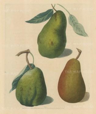 Pears: Saint Germain, Colmar and Brown Beuree.