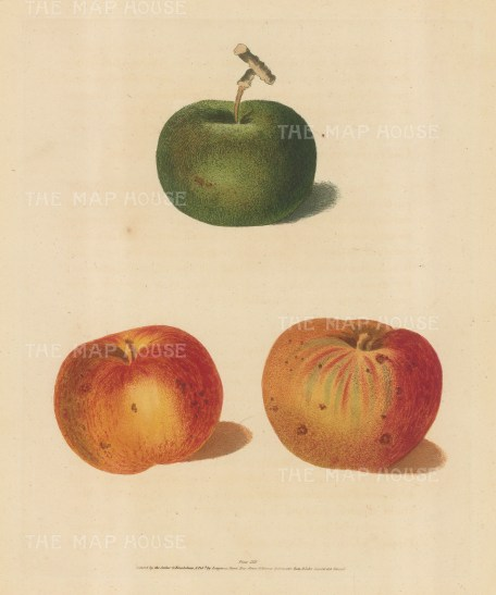 Apples: Rhenet Margill and Pippin.