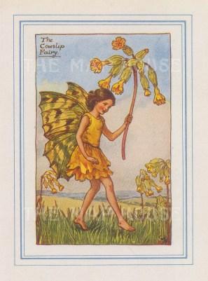 "Barker: Cowslip Fairy. 1927. An original vintage chromolithograph. 3"" x 4"". [DECp2171]"