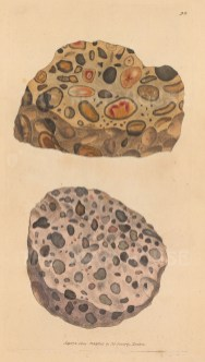 Quartzum var. aggregatum. Quartzose Pudding Stone from Hertfordshire and Essex.