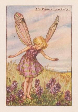 "Barker: Wild Thyme Fairy. c1925. An original vintage chromolithograph. 3"" x 4"". [DECp1893]"
