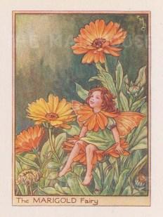 "Barker: Marigold Fairy. c1944. An original vintage chromolithograph. 3"" x 4"". [DECp2021]"