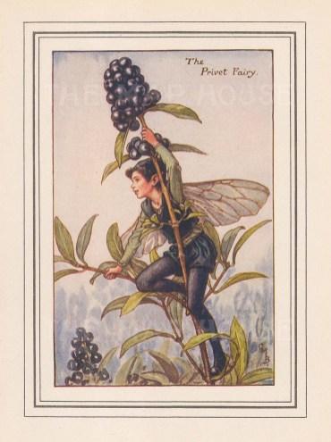 "Barker: Privet Fairy. c1926. An original vintage chromolithograph. 3"" x 4"". [DECp2082]"