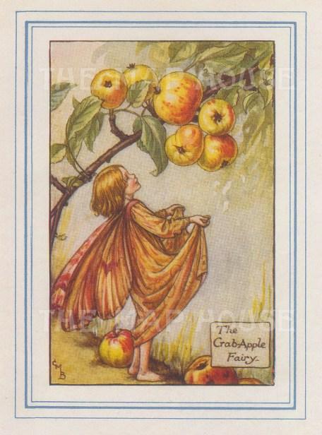 "Barker: Crab-Apple Fairy. 1927. An original vintage chromolithograph. 3"" x 4"". [DECp2177]"