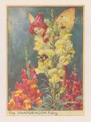 "Barker: Snapdragon Fairy. 1925. An original vintage chromolithograph. 3"" x 4"". [DECp2213]"