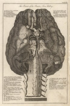 Diagram with key after the first neuroanatomist Humphrey Ridley.