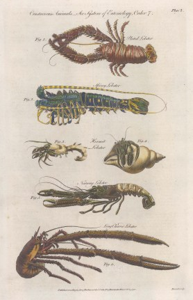 Lobster. Plated, Spiney, Hermit, Norway and Long Clawed.