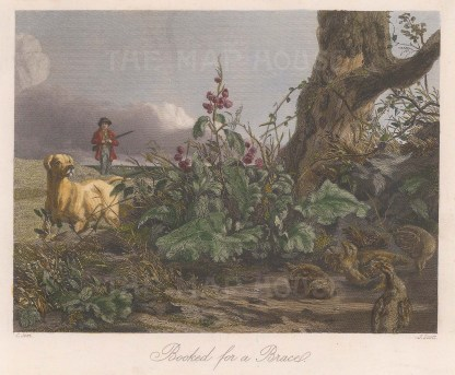 "Sporting Review: Pheasant Shooting. 1847. A hand coloured original antique steel engraving. 6"" x 5"". [FIELDp1215]"