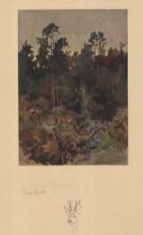 Roe Deer in the woods.