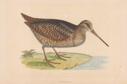 Morris: Woodcock. 1855. An original hand coloured antique lithograph. [FIELDp1583]