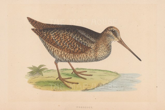 Morris: Woodcock. 1855. An original hand coloured antique lithograph. [FIELDp1583]