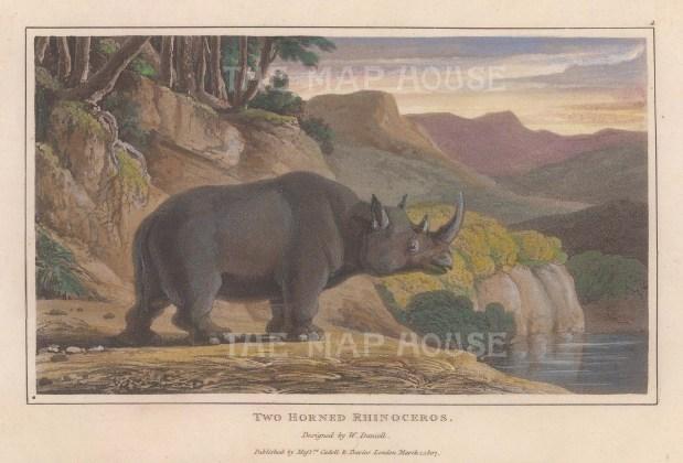 Two-horned Asian Rhinoceros.