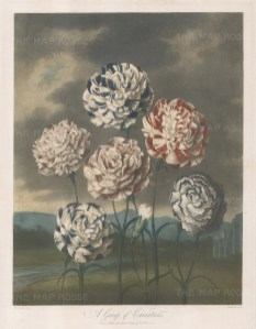 Carnations: Flakes, Bizarres, and Piquettes. almer's Defiance, Davy's Defiance, Duchess of Dorset, Duchess of Wurtemberg, British Monarch, Prince of Wales. Set in a romanticised landscape with Norman ruins.