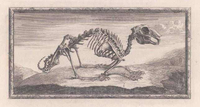 Animal Anatomy: Skeleton of a Rabbit with a decorative border.