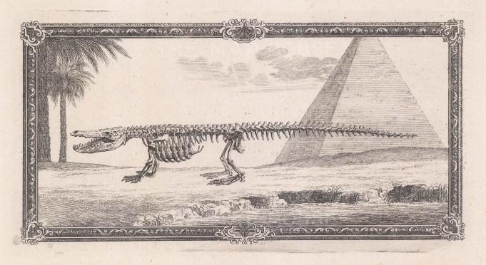 Animal Anatomy: Skeleton of Crocodile with pyramid and ornate border.