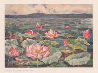 Seoul: Gyeongbokgung Palace. View of the Lotus Pond. After Edward Fitchew.