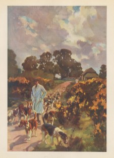 Fox Hunting: The Off Season. Kennelman walking out the hounds on a country lane.