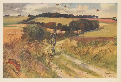 Partridge Shooting: September. Hare dashing off during a drive.