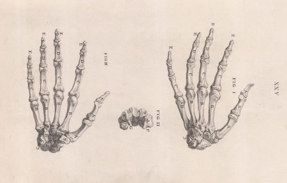Hand: Bones of the hand with detail of the carpal bones. With key.