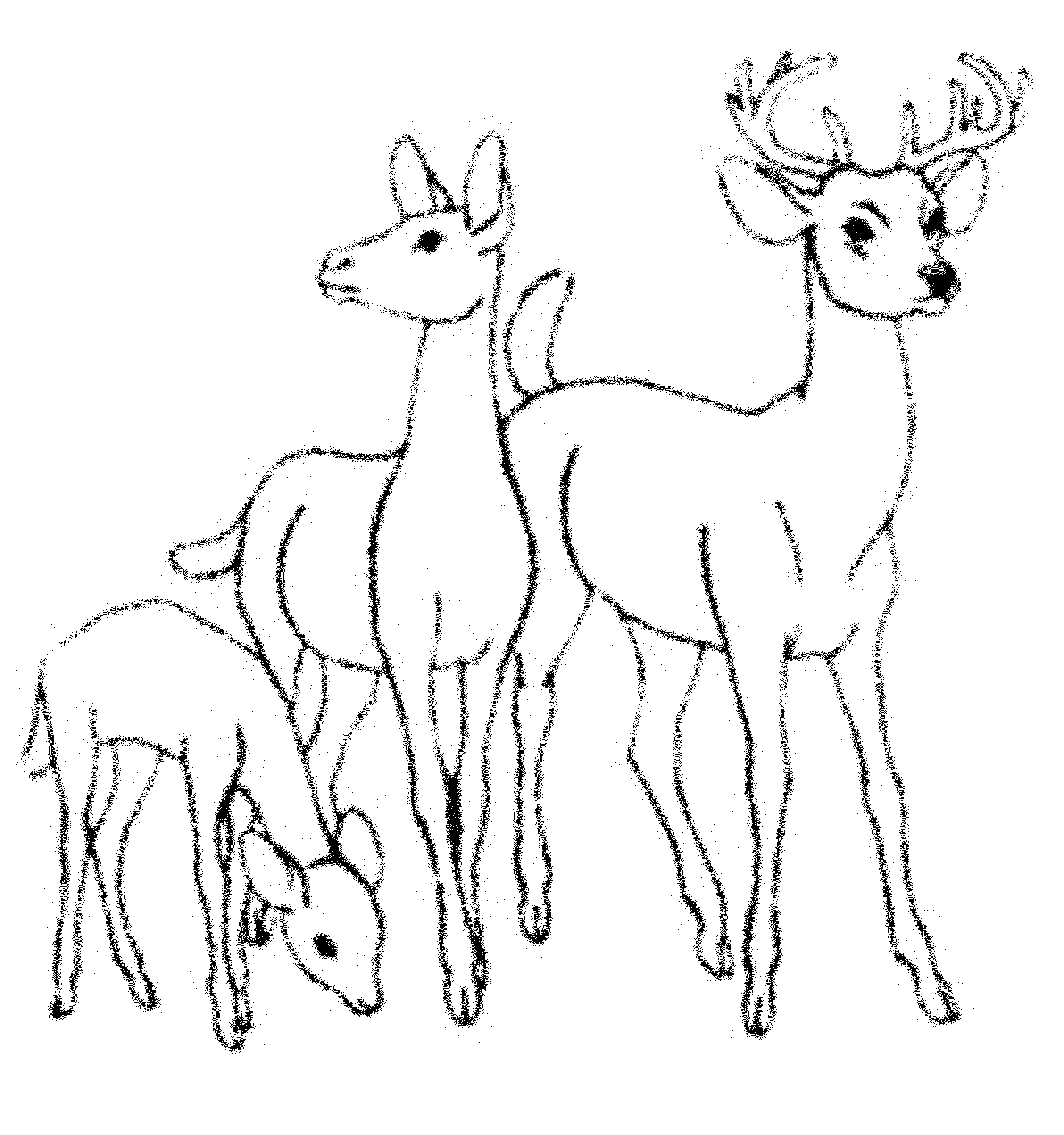 Ruminant Mammal Deer 20 Deer Coloring Pages
