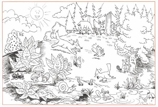 awesome wildness of forests  forests coloring pages