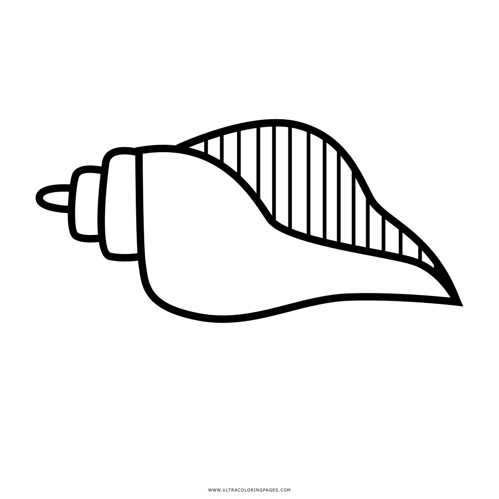 Seashell Coloring Page Ultra Coloring Pages