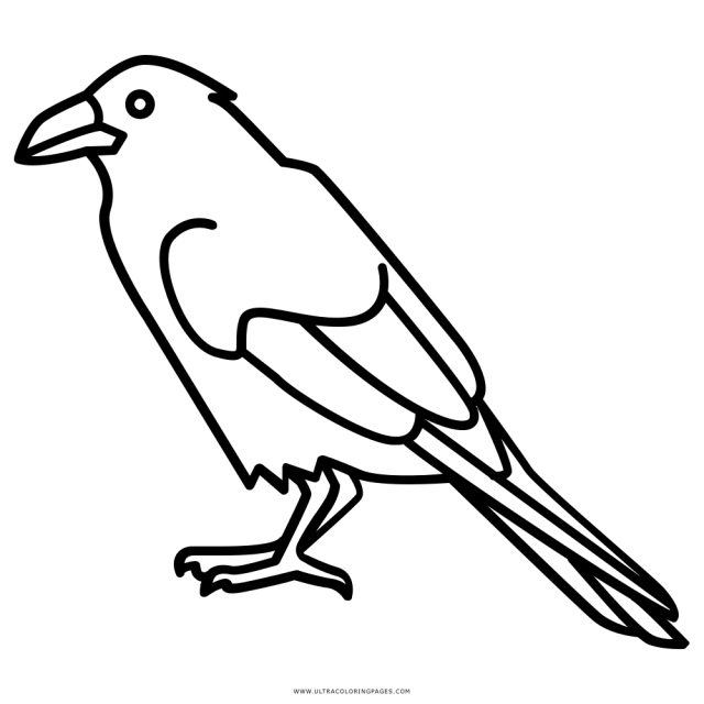 Raven Coloring Page - Ultra Coloring Pages