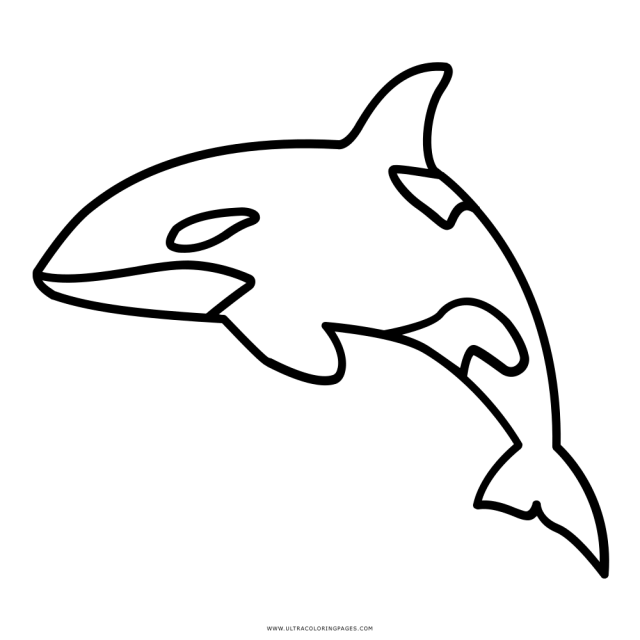 Killer Whale Coloring Page - Ultra Coloring Pages