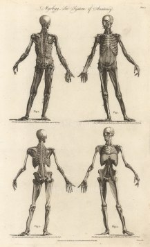 """Charles Cooke, (1) 'Myology - The System of Anatomy', 1789. An original black and white copper-engraving. 9"""" x 14""""."""