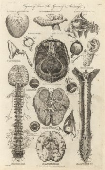 """Charles Cooke, 'Organs of Sense - The System of Anatomy', 1789. An original copper-engraving. 9"""" x 14""""."""