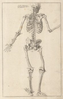 """Dr Mortherby, '[Posterior View of Skeleton]', 1775. An original antique copper-engraving. 7"""" x 12""""."""
