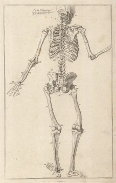 Dr Mortherby, The Skeleton, 1775. An original copper-engraving. 7 x 12 inches. [NATHISp7293]