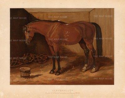 "General Tweedie: Arabian Horse. 1894. A rare original chromo-lithograph. 10"" x 7"" [NATHISp7167]"