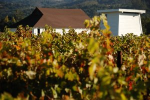 Canihan Vineyard