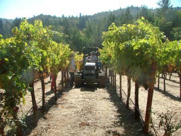 Albertina Wines Grapes