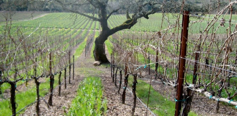 GREEDY Wines