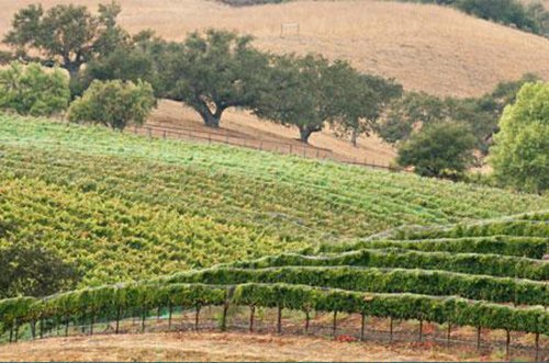Central Valley Wine Tasting Deals