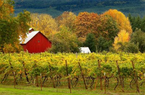 Saginaw_Vineyard
