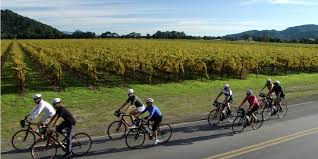 bike_vineyards