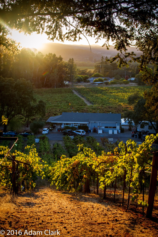 ACORN Winery/Alegría Vineyards