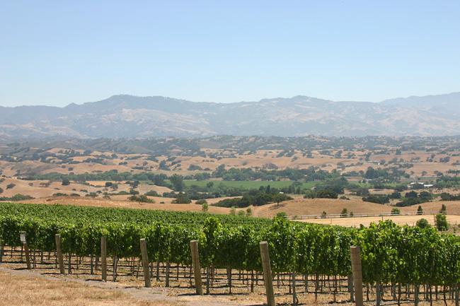 Tercero Vineyards Santa Barbara