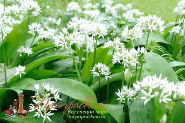 それは世帯の一般的な消毒剤として役立ちます。