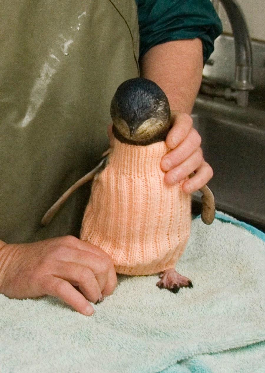 Hombre de 109 años tejió suéteres para pingüinos heridos en sus últimos días