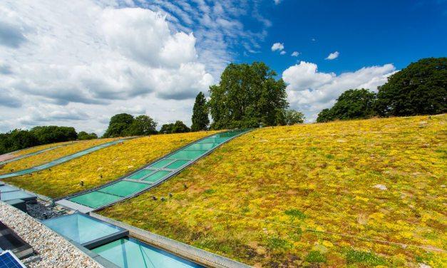 Hurlingham Racquet Centre's light green roof features Kerto® LVL