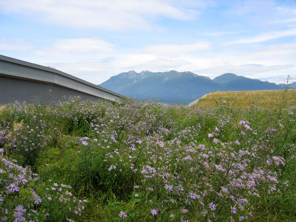 Canada's largest living roof is not open to the public to better establish a complex waterfront ecology in a continuous habitat corridor to Stanley Park. The sloping forms set up natural drainage and seed migration patterns. Photo credit: PWL Partnership Landscape Architects Inc.