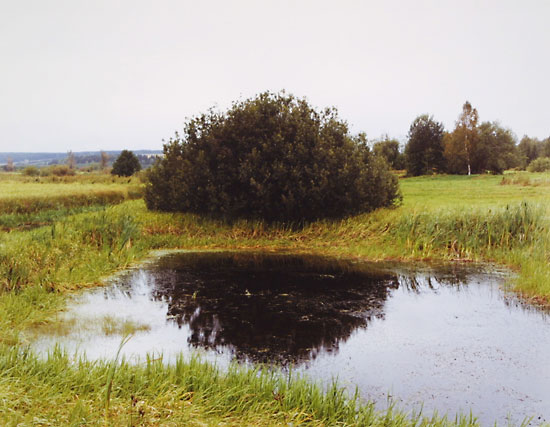 Perm (Bush), 2001. © Anna Shteynshleyger