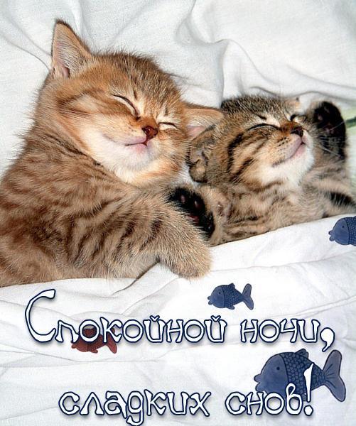 Картинки спокойной ночи, прикольные, веселые, красивые