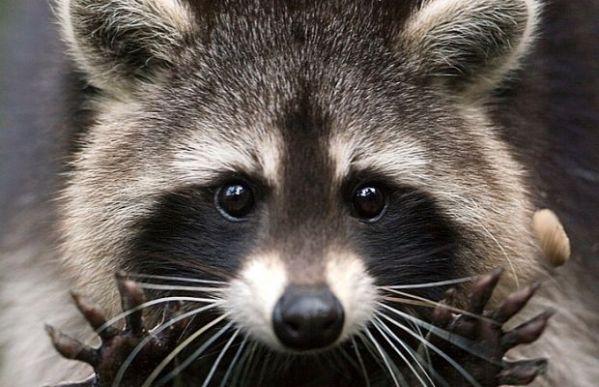 Смотреть картинки про животных - прикольные и смешные ...